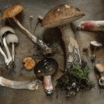 wellness-living-habits-adaptogenic-mushrooms